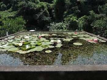 昨日の用水池