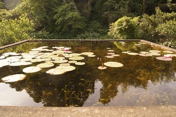 用水池の全景