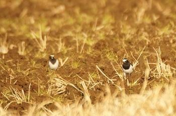 この時期、田を耕してくれると助かるわ