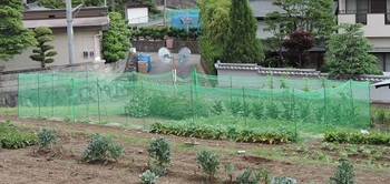囲みの中は野菜です