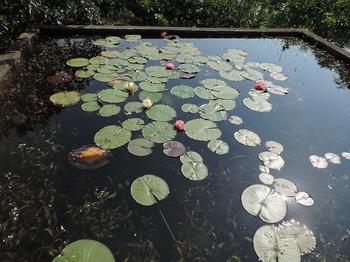 大きい方の用水池
