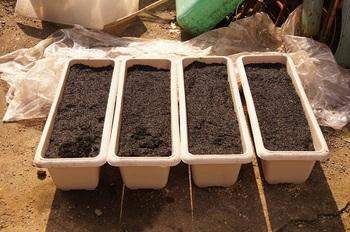 安納芋が植えてあります