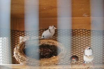 巣の上で何しているの?