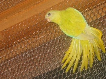 背中は鮮やかな黄色です