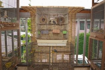 鳥かごの後ろの網にちこっと緑